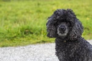 O właścicielach psów słów kilka
